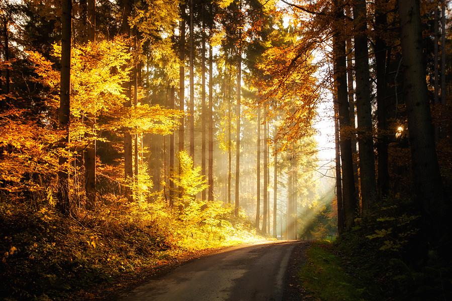 piekne krajobrazy1 Złota jesień   leśne krajobrazy