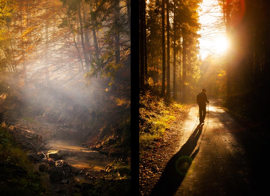 piekne krajobrazy3 Złota jesień   leśne krajobrazy