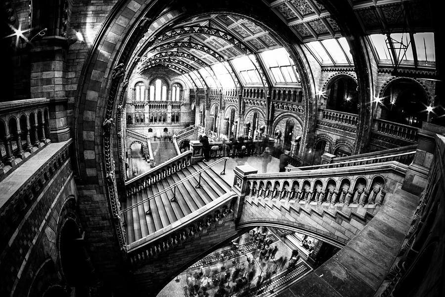 natural history museum4 Angielskie zawijasy   fotografia architektury