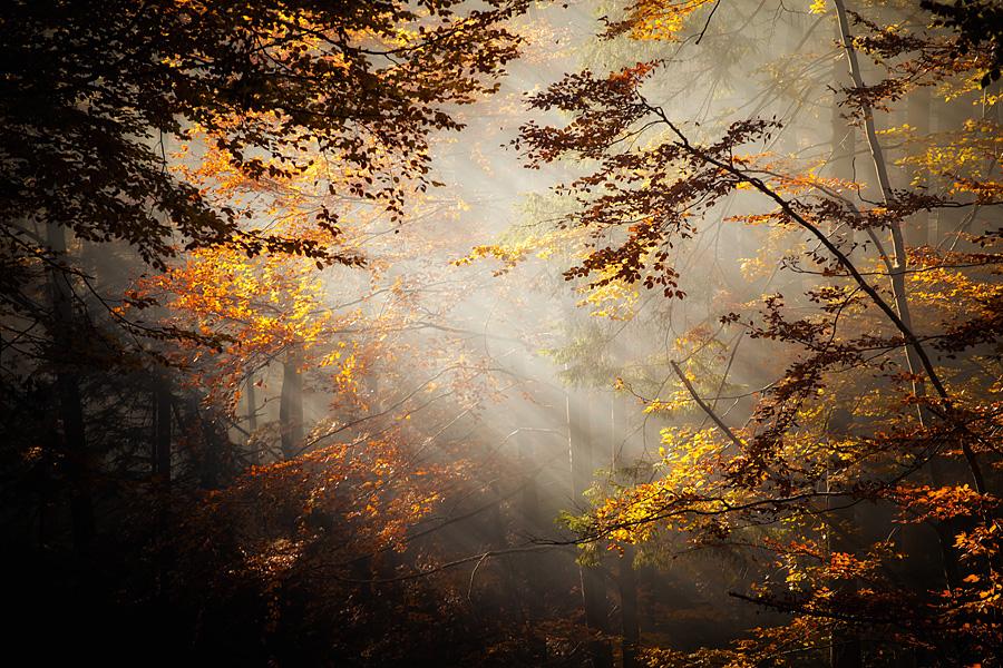piekne krajobrazy2 Złota jesień   leśne krajobrazy