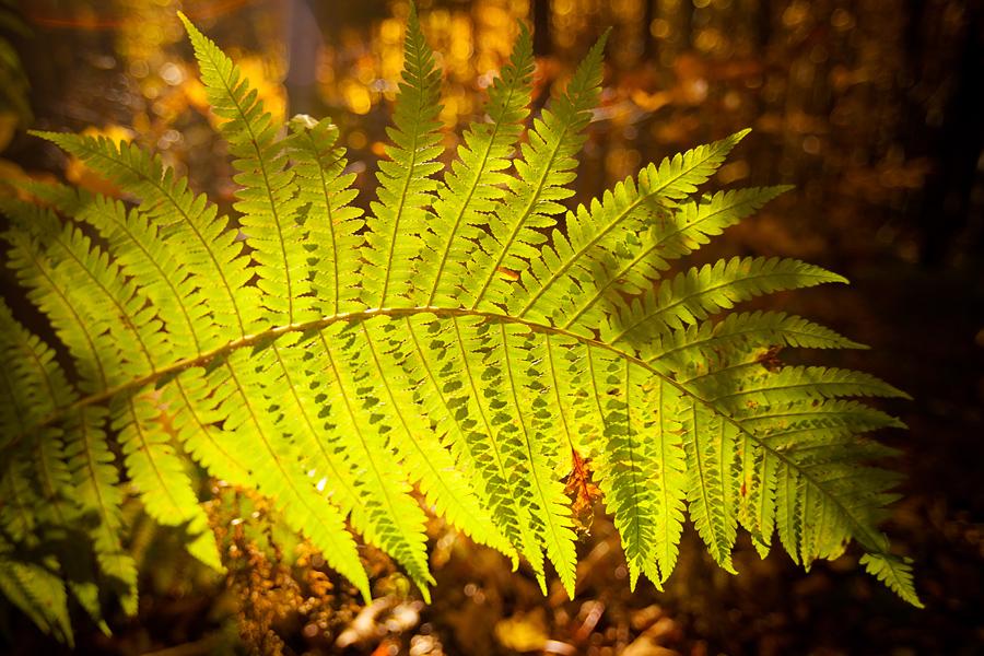 piekne krajobrazy4 Złota jesień   leśne krajobrazy