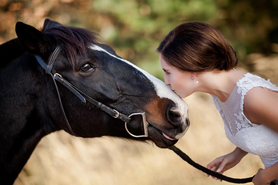 plener slubny z koniami 3 Ania i Michał   plener ślubny w stadninie koni i na zamku