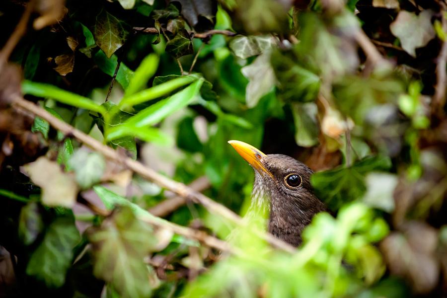zdjecia ptakow1 Ptasie maleństwa