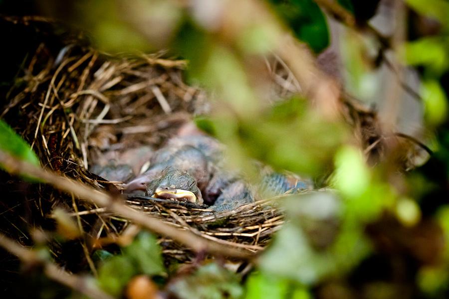 zdjecia ptakow2 Ptasie maleństwa