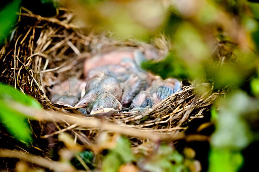zdjecia ptakow3 Ptasie maleństwa