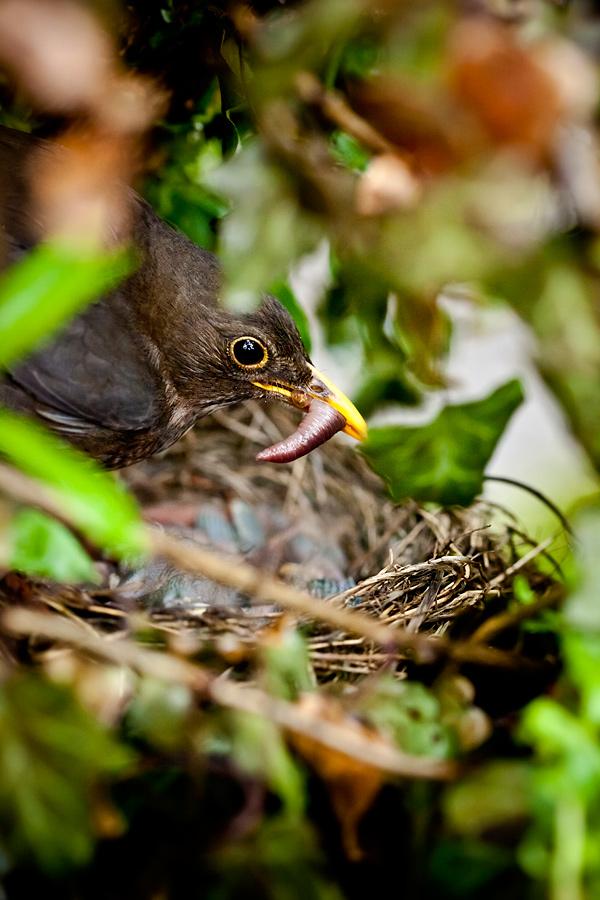 zdjecia ptakow4 Ptasie maleństwa