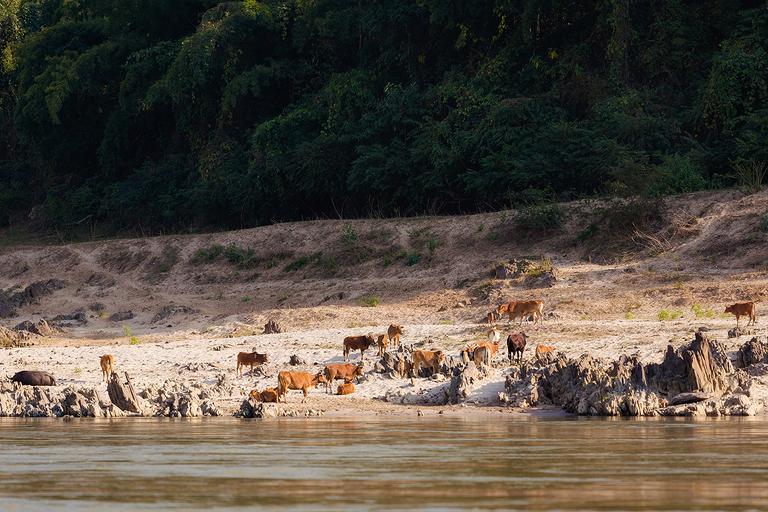 a huayxai pakbeng5(pp w768 h512) Zdjęcia z podróży   Laos