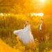 Upalny plener ślubny M&M - zapowiedź